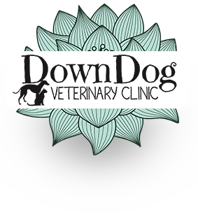 DownDog Veterinary Clinic