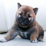 Puppy Preventive Care